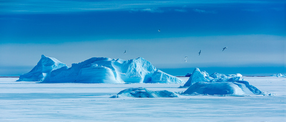 Icebergs and Snow Petrels